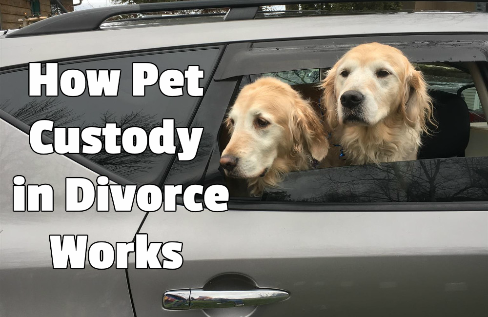 How Pet Custody in Divorce Works